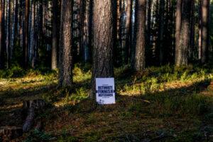 Suomivihko metsässä